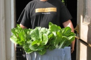 A worker for the East High Youth Farm carries a crate of vegetables.