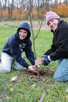 Volunteers wrapping a young fruit tree in preparation for winter.