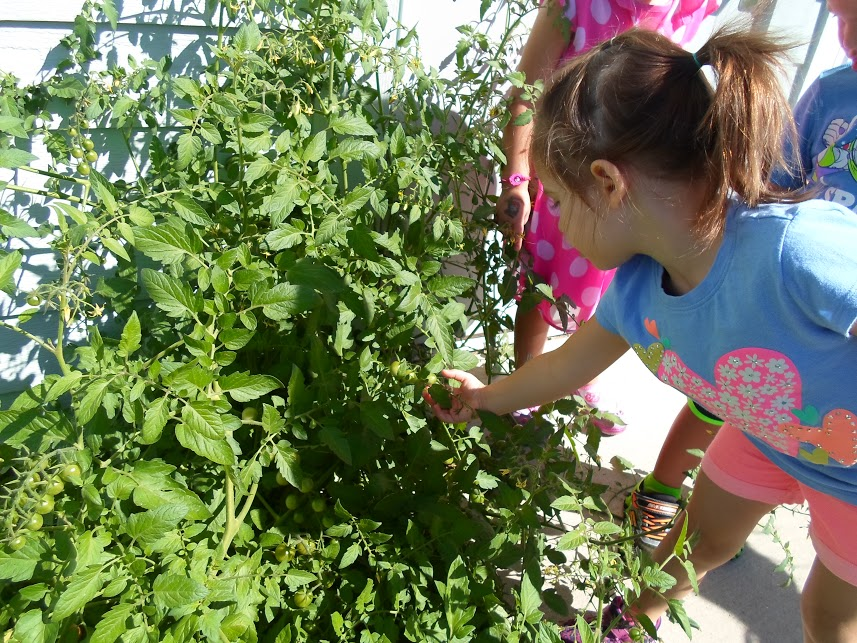 Early Care and Education Garden Micro Grants   Community GroundWorks